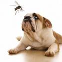 Punture di insetti