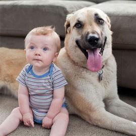 Amici Pets